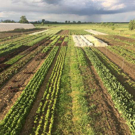 Holisztikus gazdálkodás/Holistic Farm Management