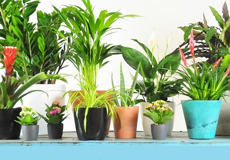 7 Best Plants To Purify Your Indoor Air