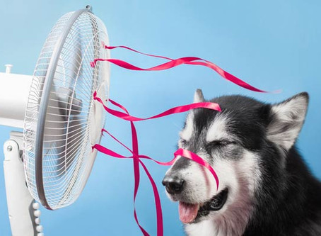 9 Simple Ways To Keep Cool During Hot Weather