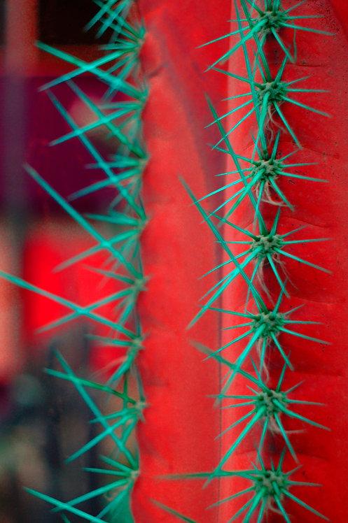 Hot cacti