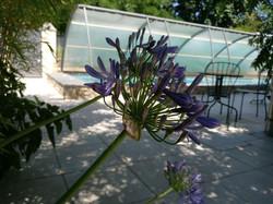 fleurs du sud sur la terrasse du Clos du Théron, chambre d'hôtes à Cournonterral, HéraultThéron, cha