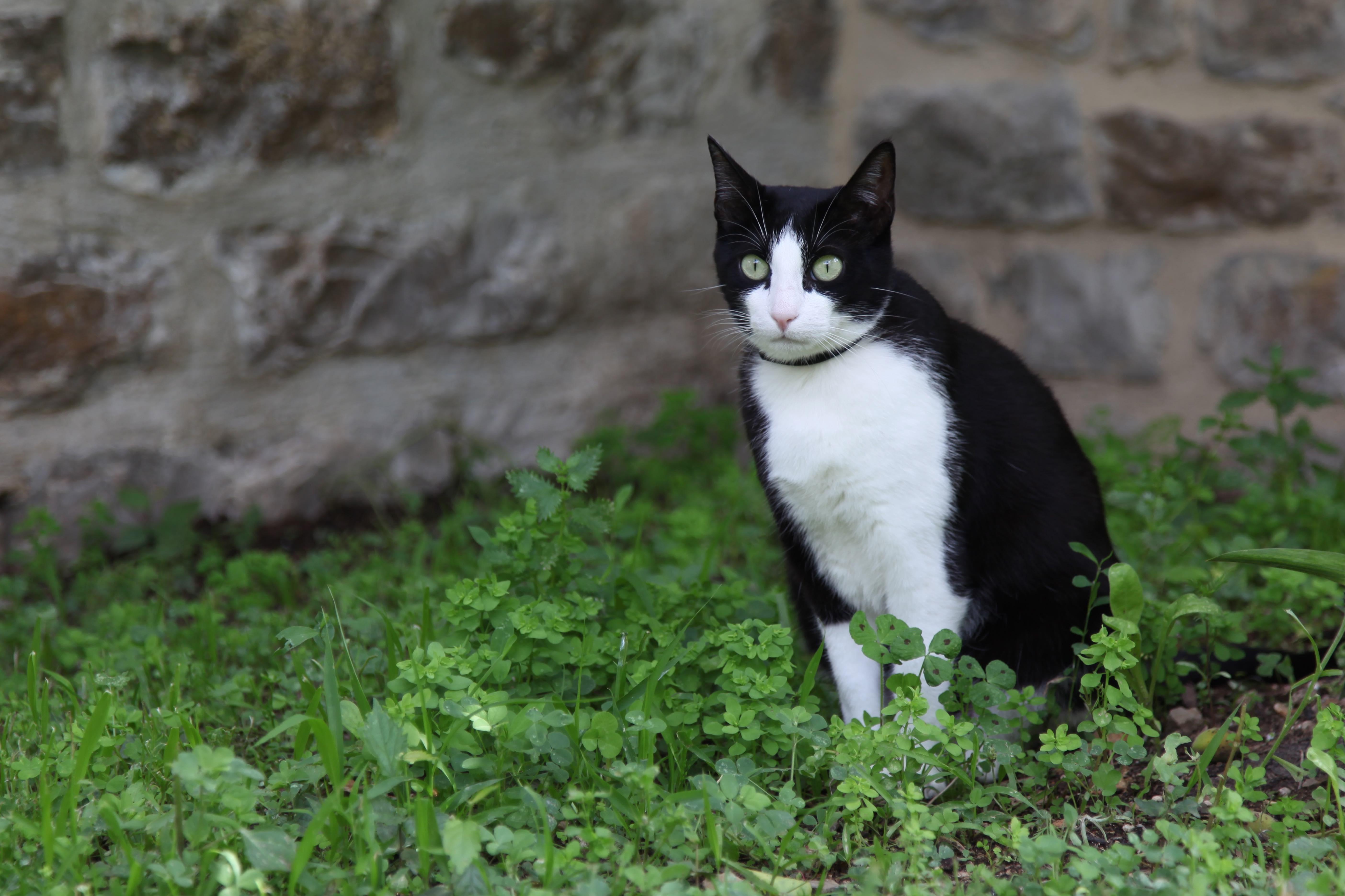 Félix, le chat de la maison