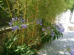 fleurs de la terrasse du Clos du Théron, chambre d'hôtes à Cournonterral, Hérault