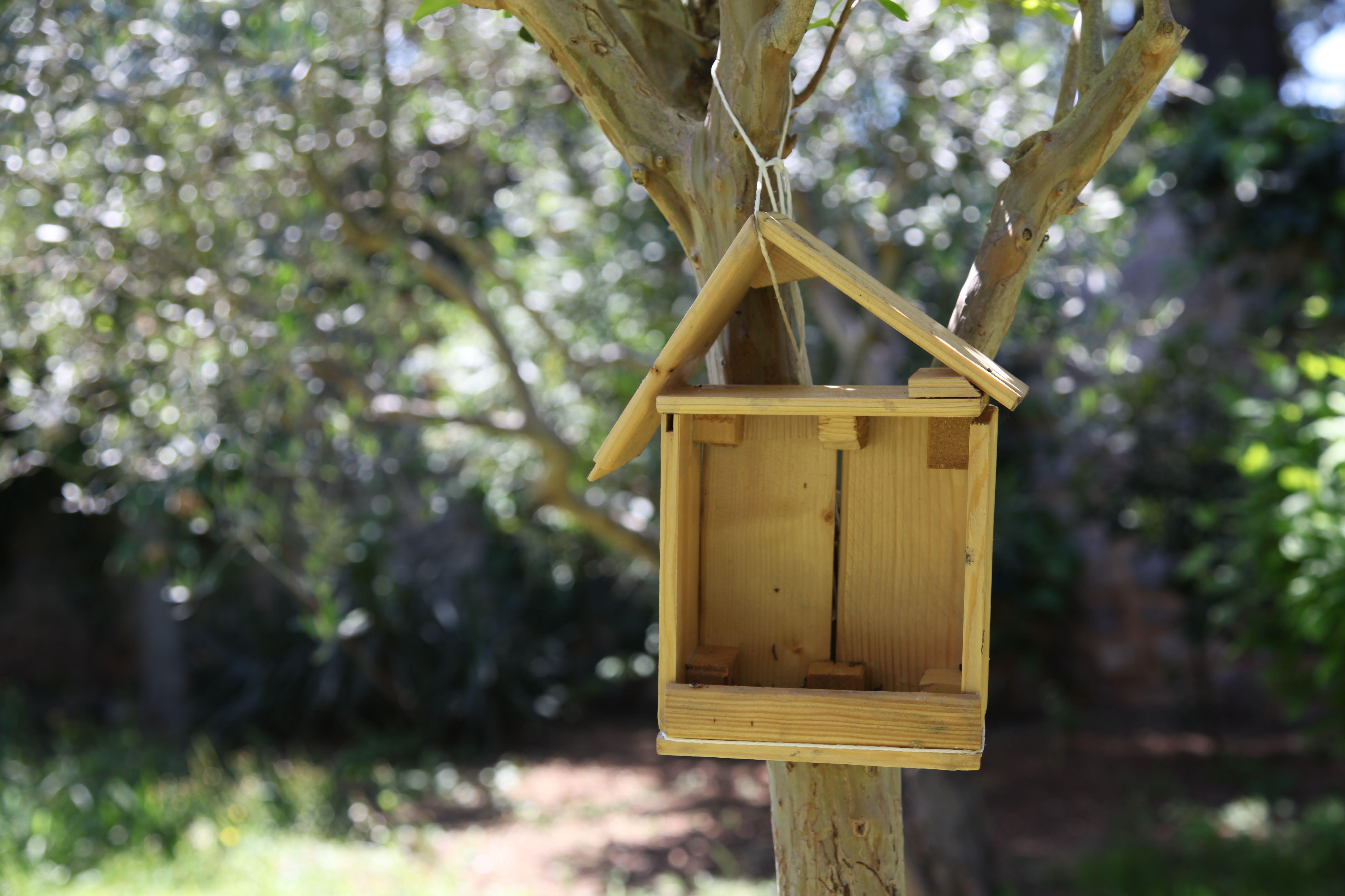 Mangeoire à oiseau dans le jardin