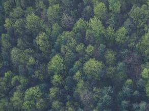 Neue DDI Initiative für privatwirtschaftliche Unterstützung des deutschen Waldes