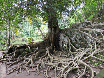 Tree with tree roots
