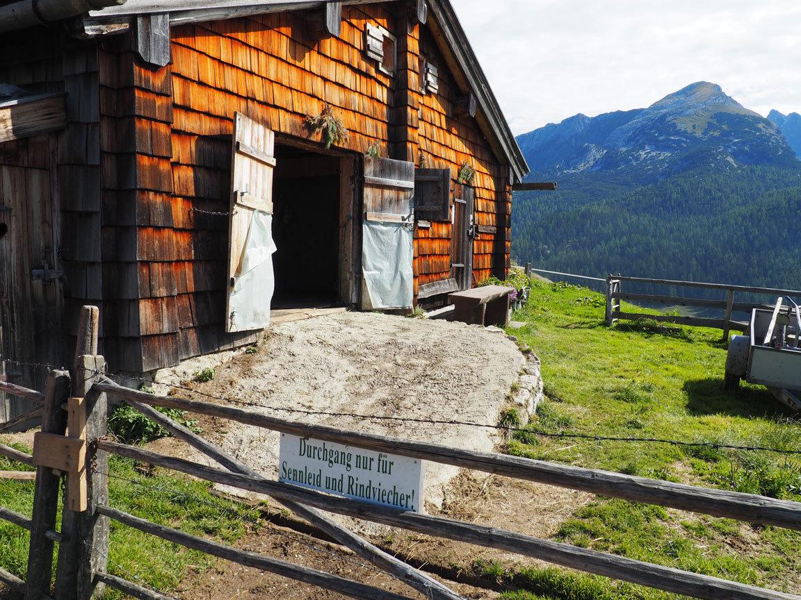 Aufi auf die Alm/Up on alpine pasteures