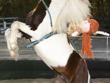 Pony Act.jpg