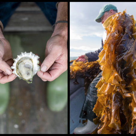 Diversification for Sustainability – Lobster fishing and Aquaculture in Maine