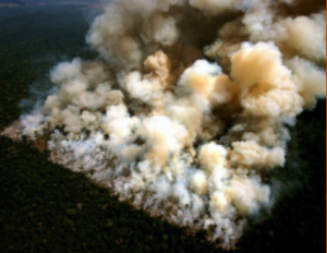 Burning rainforests in the amazon for soy/feedstock production