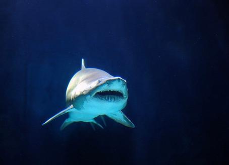 CITES COP 16: Shark Press Conference