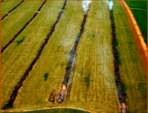 Burning of forests for soy production