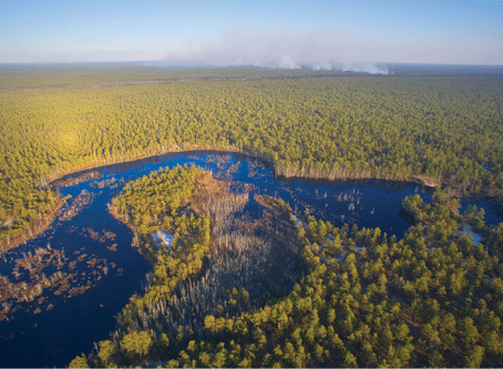 The Pinelands National Reserve; Thinking Globally, Acting Locally.