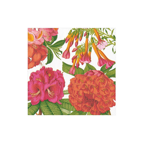 Jefferson's Garden Study Cocktail Napkins