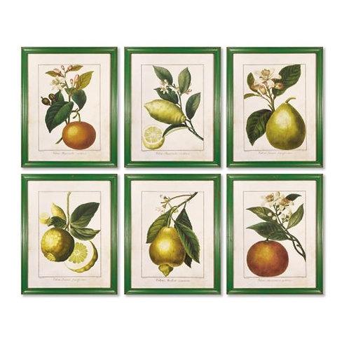 Citrus Prints - Set Of 6