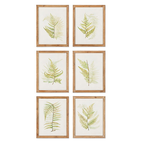 FRAMED FERN STUDY, SET OF 6