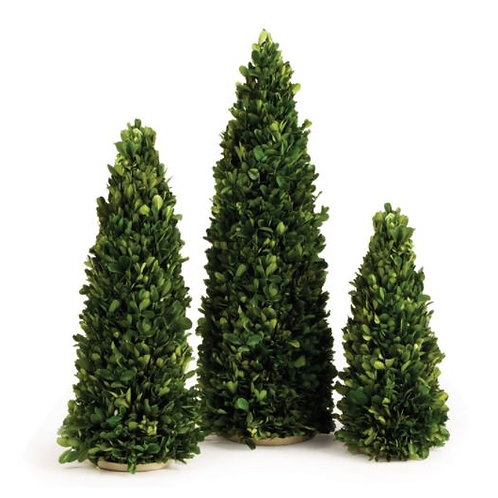 Mini Boxwood Trees - Set of 3