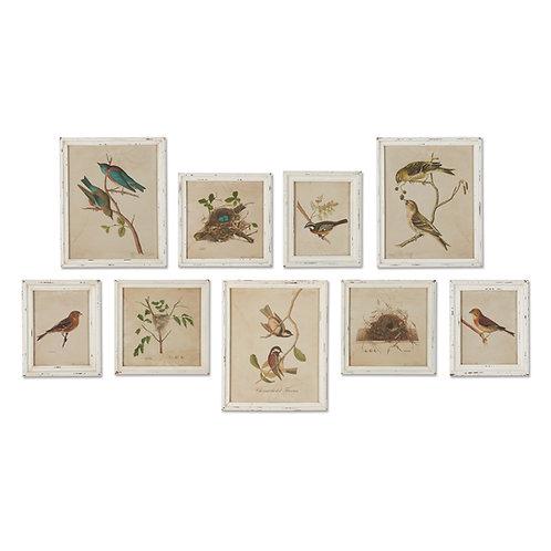 FRAMED AVIARY BIRD & NEST HABITAT PRINTS, SET OF 9
