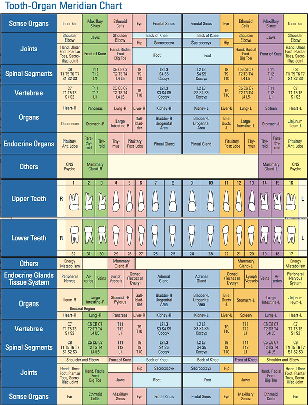 Tooth Meridian Chart