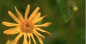 如何用自然療法處理常見的意外創傷?