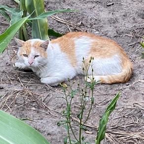 Katzenelend auch in Deutschland