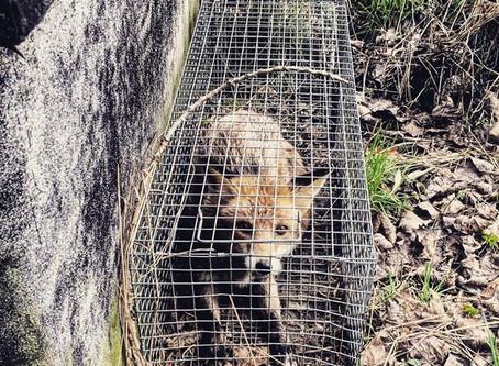 Artenschutz - die Lizenz zum Töten