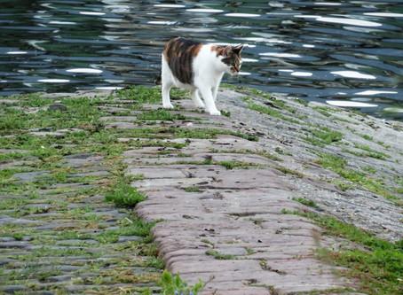 Freilaufende Katzen: Bedrohen sie die Artenvielfalt?