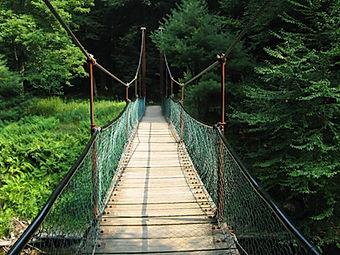 Swinging Bridge in Cook Sorest State PArk
