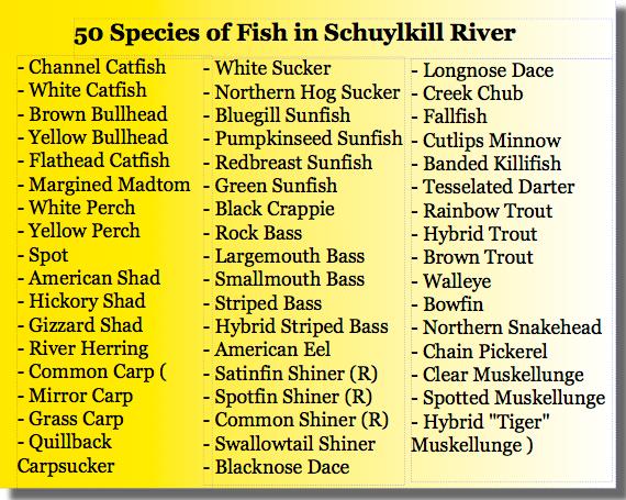fishing the schuylkill rivver pennsylvania