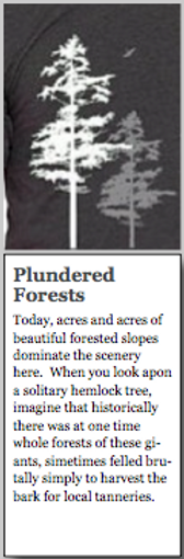 •••forests.png