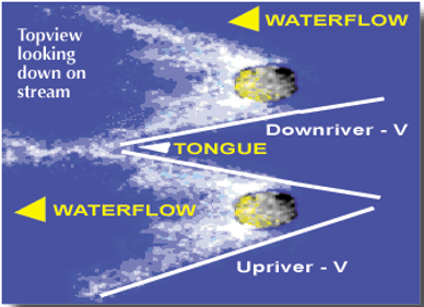 Downriver V