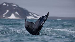 humpack-whale-nature.jpg