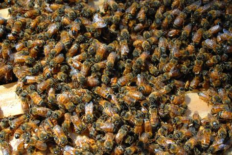 Bee Keeping and Producing Honey
