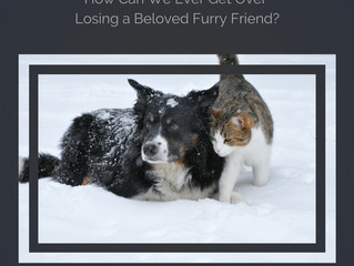 How Can We Ever Get Over Losing a Beloved Furry Friend?