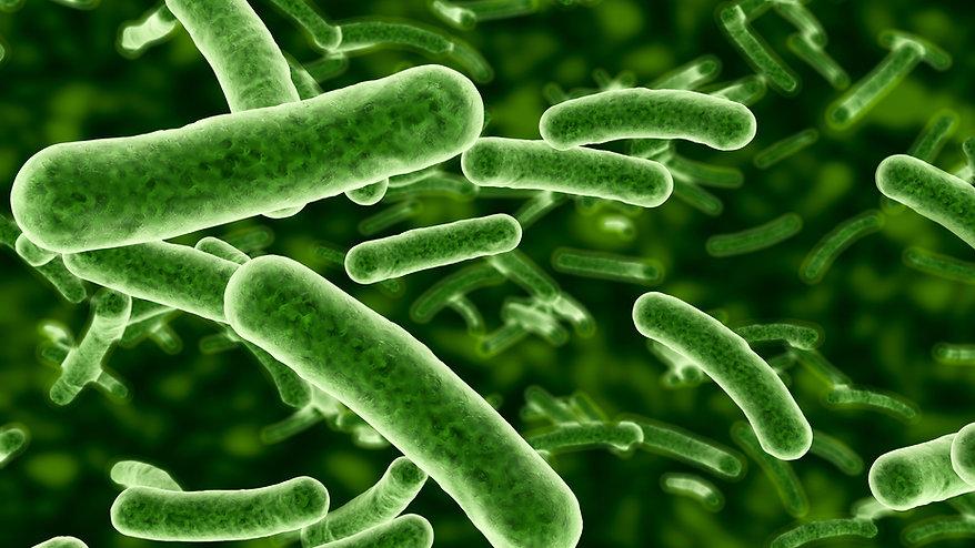 Bakterien_1000.jpg