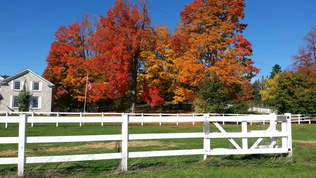 Maple Stone Farm