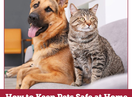 How to Keep Pets Safe During COVID-19