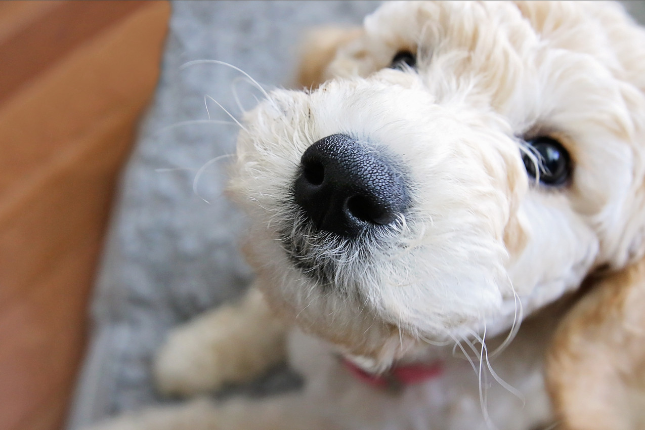 Don't you just want to boop this nose?!