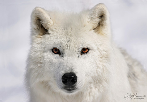Wolf2Logo.jpg