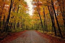 Arowhon Road, Algonquin Provincial Park