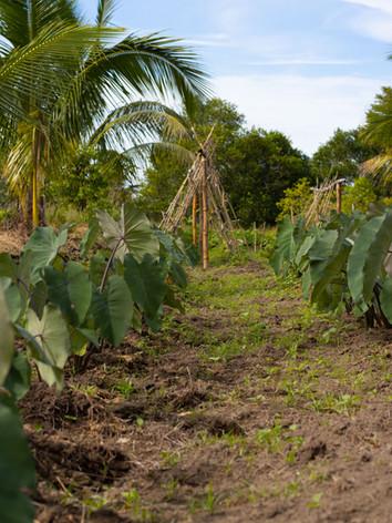 Ranadi Organics Farm