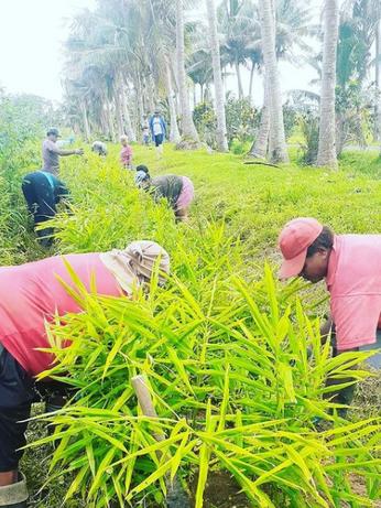 Ranadi Organics Farming.PNG