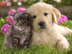 For The Love Of Cuteness!
