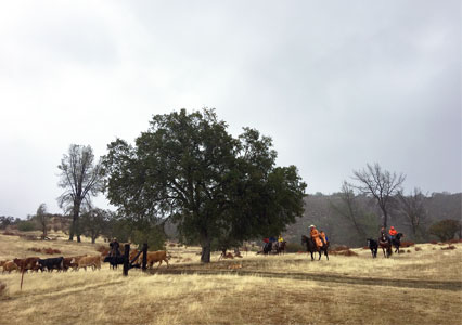 Dude_Ranch_Weekend_Taylor_Mesa