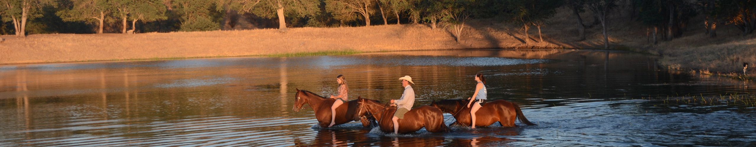V6_Ranch_Swimming_Horses