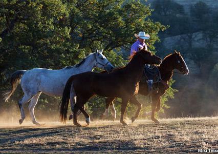 V6_Ranch_Photography_Workshop_Horses