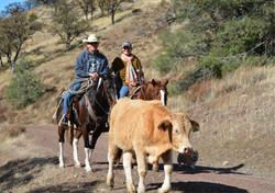 V6_Cattle_Drive_John_Anne