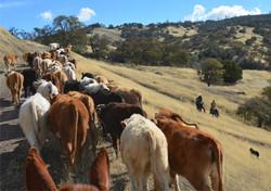 V6_Cattle_Drive_Juan_John