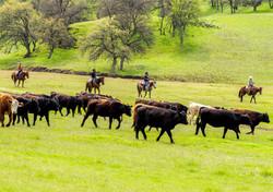 V6_Cattle_Drive_Airstrip