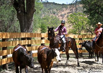 V6_Blue_Oak_Horse_Camp_Sorting